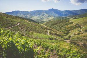 Vignes sur la Côte Vermeille. Photo © DR