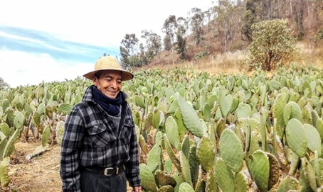 Photo : Campesino dans son champ de nopal au pied du volcan Teuhtli. Photo © François Collombet