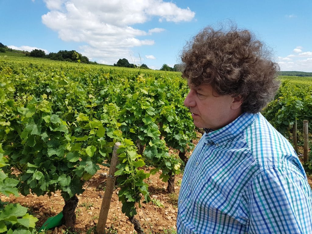 Philippe Pacalet sur une parcelle de Corton Bressandes, vignes en pleine propriété. Photo © Pierre d'Ornano/Aeternus.fr
